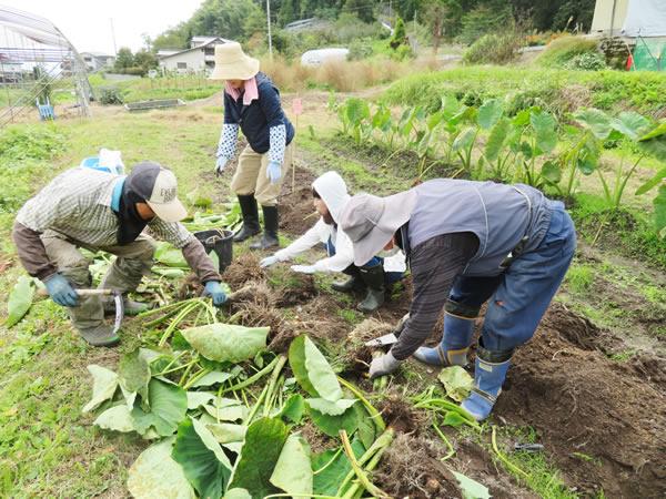 [寄稿]里芋掘りなど野菜収穫体験で交流の集い