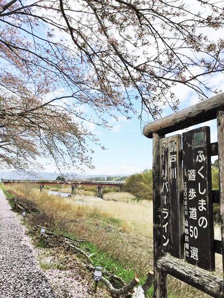 [寄稿]浪江町からの桜レポート