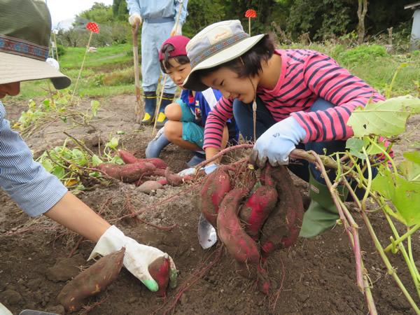 地域特産の秋野菜収穫体験や山形芋煮つくりで交流の集い